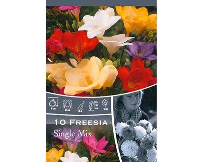 Geliebte Freesien Mischung kaufen bei OBI @LD_81
