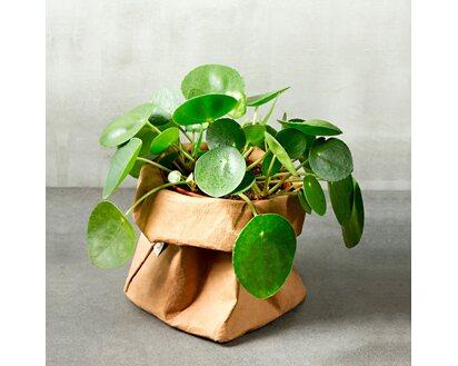 Ziertopf schwarz Kunstpflanze Deko K/ünstliche Pfannkuchenpflanze Pilea Topf-/Ø 11 cm inkl H/öhe 25 cm