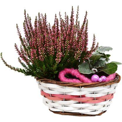 bepflanzte schale herbst ovaler brotkorb 2 pflanzen rosa ca 25 cm x 17 cm kaufen bei obi. Black Bedroom Furniture Sets. Home Design Ideas