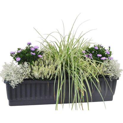 balkonkasten set vertr umter herbst ii 8 pflanzen kaufen bei obi. Black Bedroom Furniture Sets. Home Design Ideas