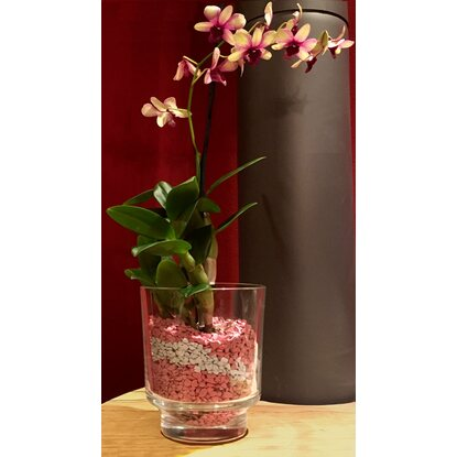 colomi orchideengranulat 1 l rosa kaufen bei obi. Black Bedroom Furniture Sets. Home Design Ideas