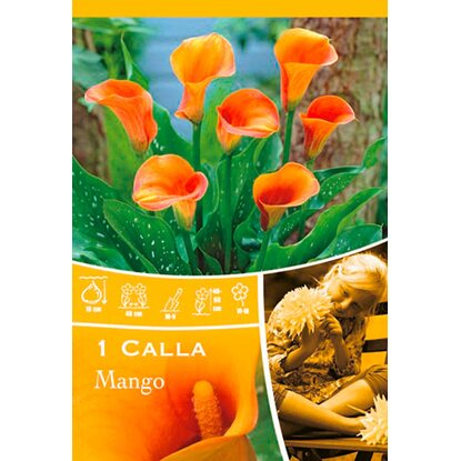 "Calla ""Mango"" Orange"