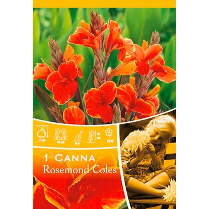 "Canna ""Rosemond Coles"" Orange-Gelb"
