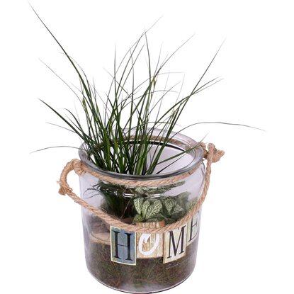 bepflanzter glas topf mit gr npflanzen kaufen bei obi. Black Bedroom Furniture Sets. Home Design Ideas