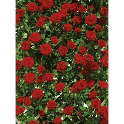 kletterrose santana rot h he ca 30 40 cm topf ca 4 l. Black Bedroom Furniture Sets. Home Design Ideas