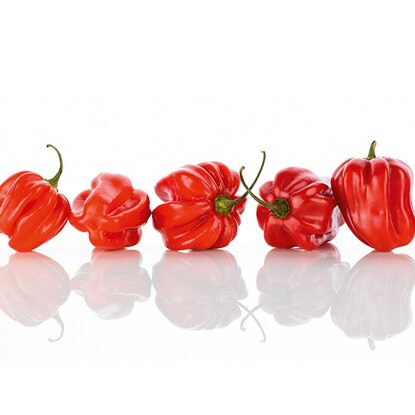 Kitchen Glas Spritzschutz Red Pepper Formation 50 cm x 90 cm