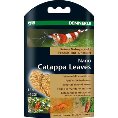 Nano Catappa Leaves Seemandelbaumblätter