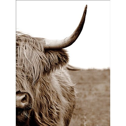 Leinwandbild Basic Anonymus Scott. Highland Cattle ll 77 cm x 57 cm