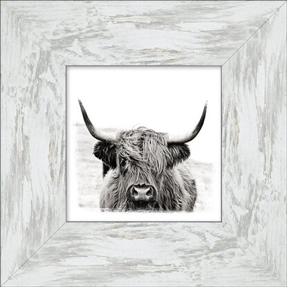 Bild mit Rahmen Scottish Highland Cattle II 34 cm x 34 cm