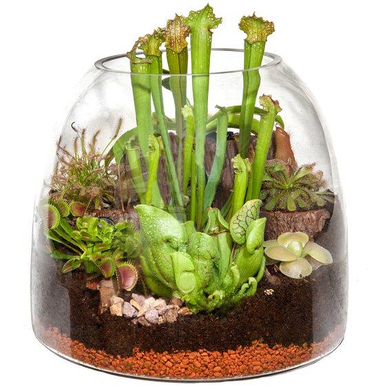 fleischfressende pflanzen in der glaskugel ca 30 cm kaufen bei obi. Black Bedroom Furniture Sets. Home Design Ideas