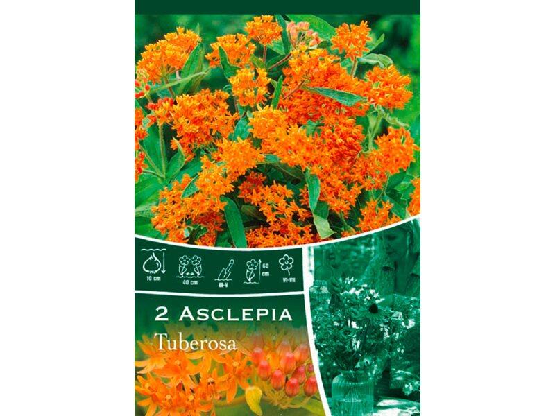 seidenpflanzen tuberosa orange kaufen bei obi. Black Bedroom Furniture Sets. Home Design Ideas