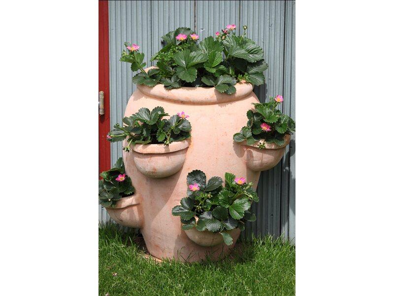Gemeinsame Erdbeerpflanzen Hummi online kaufen bei OBI &TT_61