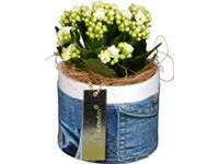 bepflanzter keramiktopf mit jeansmotiv kaufen bei obi. Black Bedroom Furniture Sets. Home Design Ideas