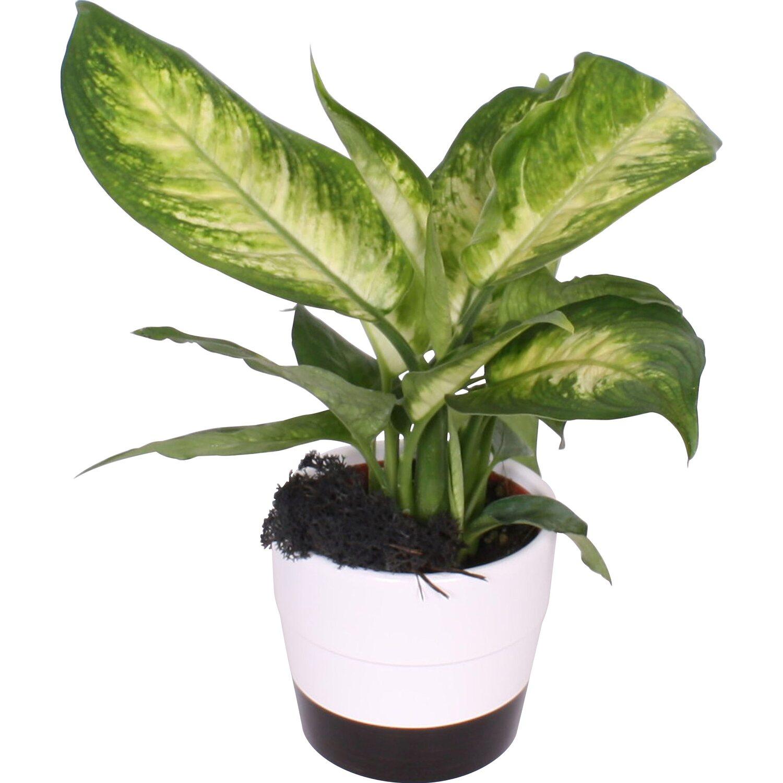 arrangement gr npflanzen in schwarz wei keramiken topf. Black Bedroom Furniture Sets. Home Design Ideas
