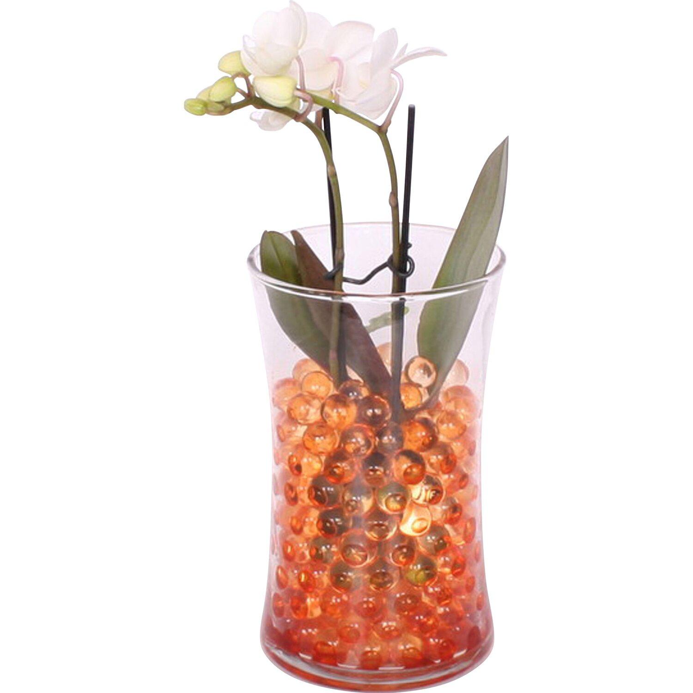 falterorchidee in glas mit gelkugeln topf ca 10 cm kaufen bei obi. Black Bedroom Furniture Sets. Home Design Ideas