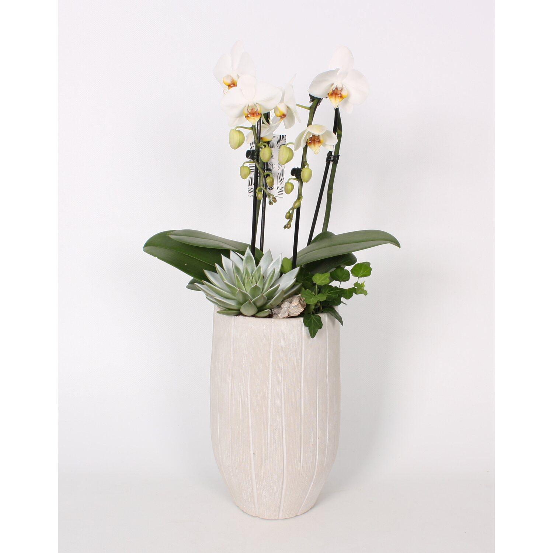 Orchideen Online Kaufen Bei Obi Obide