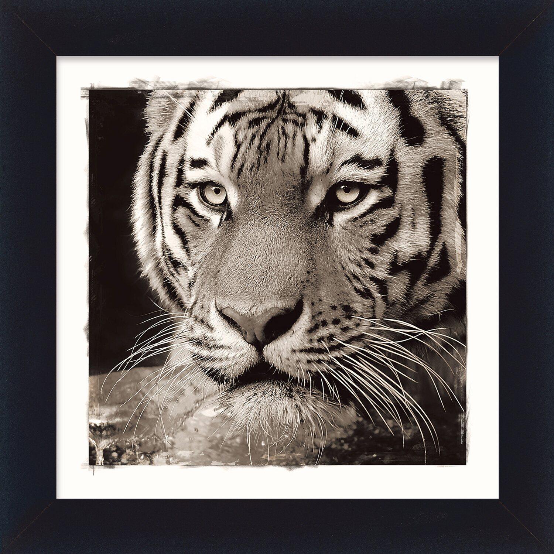 Bild mit Rahmen Tiger 38 cm x 38 cm kaufen bei OBI