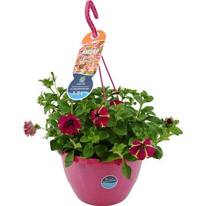 petunien ampel amore topf ca 27 cm petunia kaufen bei obi. Black Bedroom Furniture Sets. Home Design Ideas