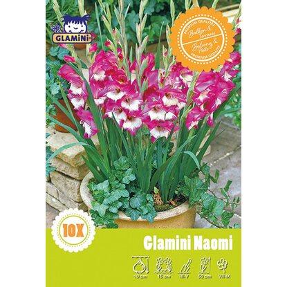 gladiolen naomi rosa mit wei kaufen bei obi. Black Bedroom Furniture Sets. Home Design Ideas