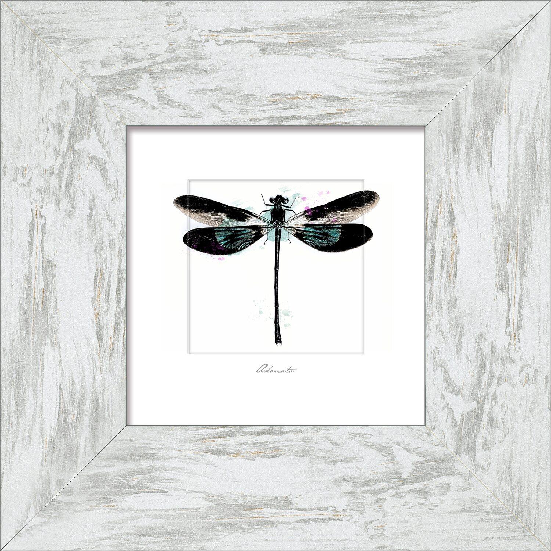 Bild mit Rahmen Butterfly Spring II 34 cm x 34 cm kaufen bei OBI